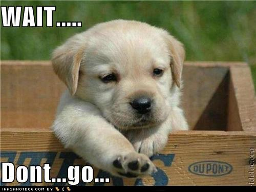 sad-puppy.jpg.54101ae43ed4a6764c8bec379bf055fc.jpg