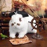 Bini The Bunny