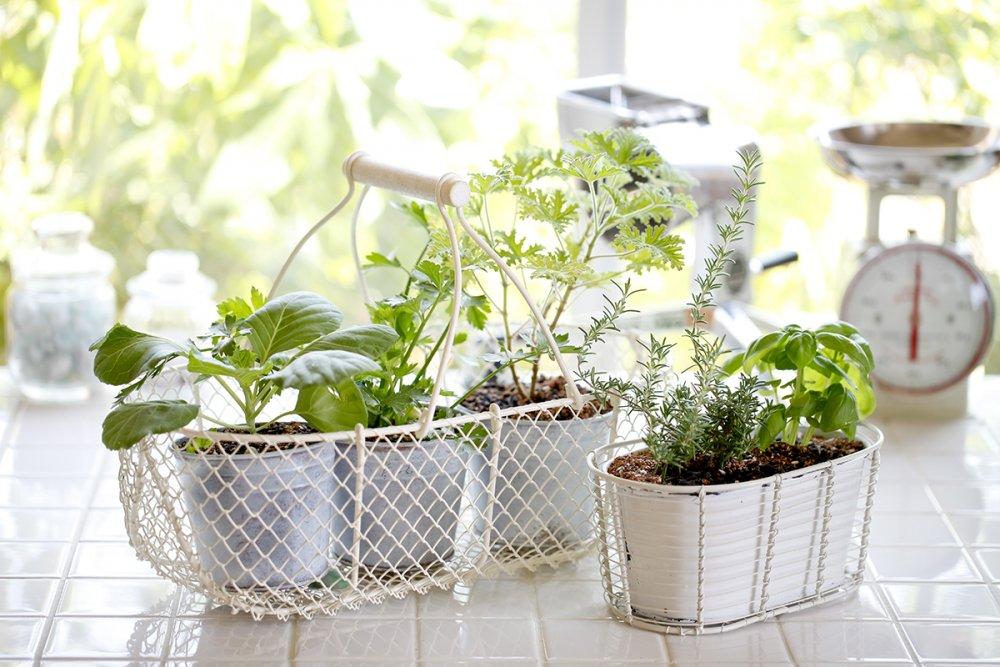 BioHomeCares-Smart-gardening.thumb.jpg.4795209ffae334d6aa853fd045c2d0f2.jpg